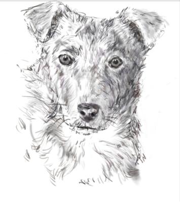 Как сделать портрет собаки