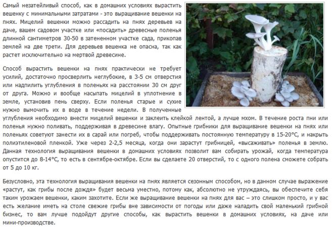 Технология выращивания грибов в до 910