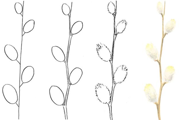 Картинки вербы весной нарисованная карандашом