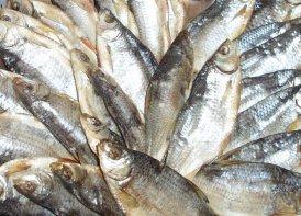 Срок хранения и срок годности вяленой рыбы.