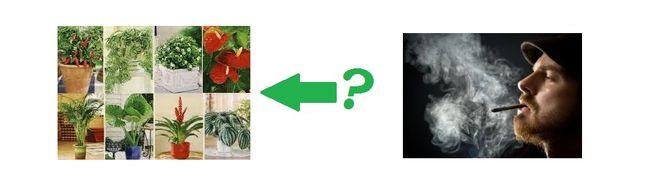 табачный дым и комнатные растения, курение в доме, вред курения