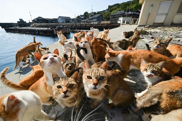 К чему снится много котов?
