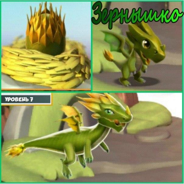 Как вывести зернышко дракономания