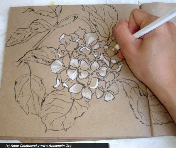 Как нарисовать поэтапно карандашом гортензии