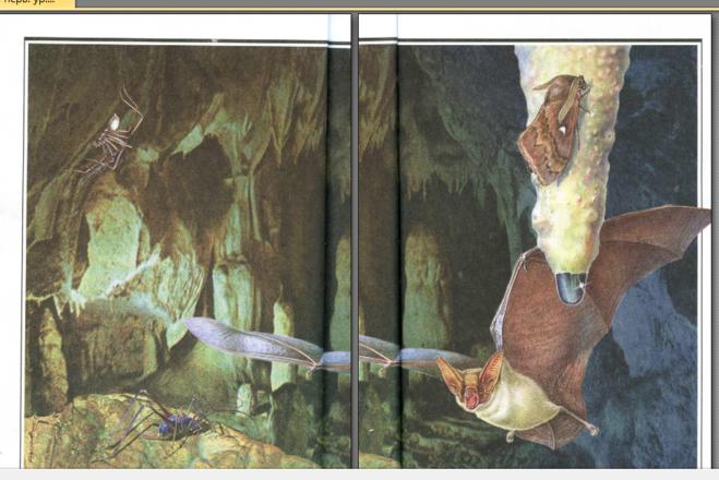 в пещере великан на поляне