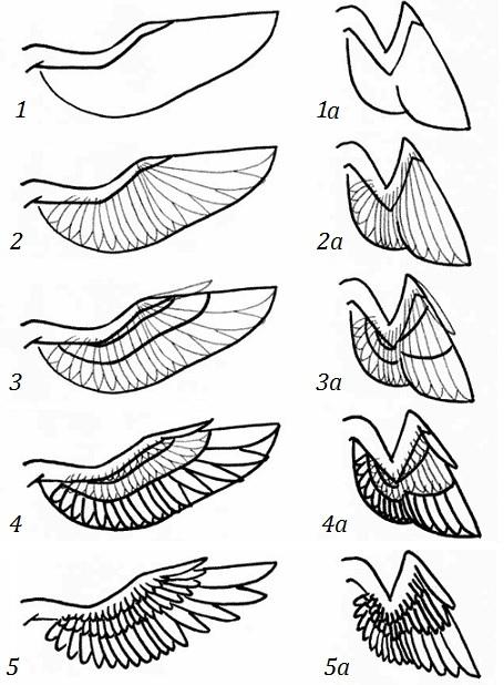 Рисуем поэтапно крылья ангела карандашом поэтапно