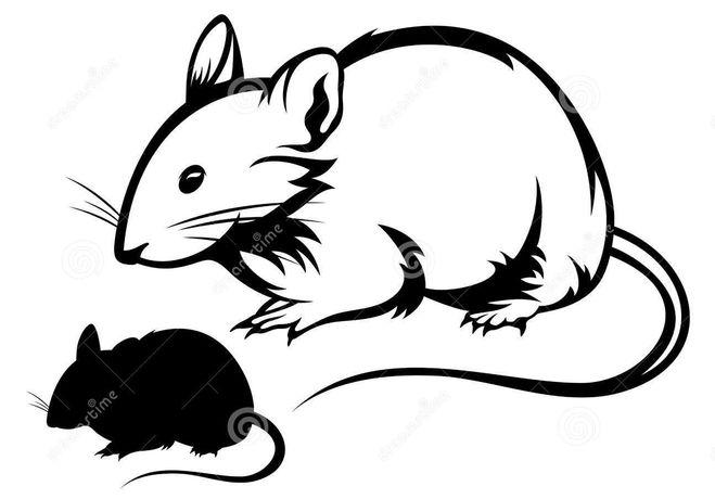 вытынанки крысы силуэт