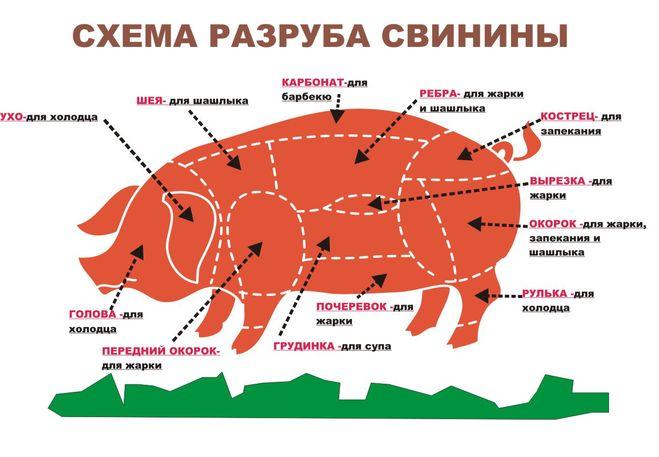 Где кострец на туше свиньи?