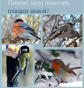 почему помогают птицам зимой