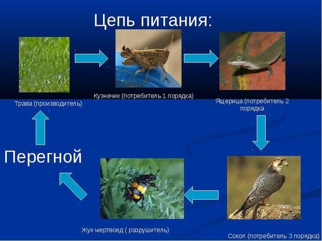 роль насекомых