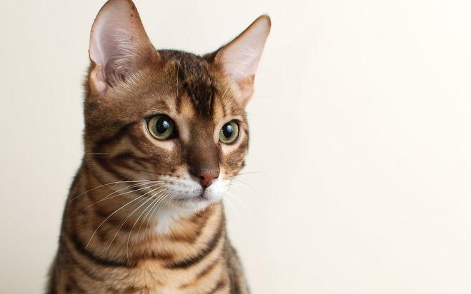 Что делать если кот стал гадить