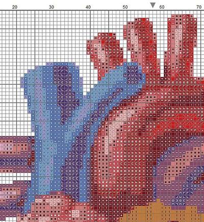 реалистичное анатомическое сердце вышивка крестиком схем