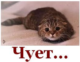 """""""Российская пропаганда уже готовится максимально использовать все, что завтра скажет Янукович, против Украины"""", - Чубаров - Цензор.НЕТ 7287"""