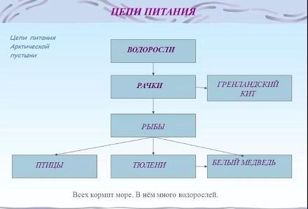 Схема цепи питания для черноморского побережья кавказа фото 331