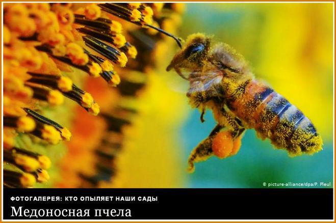 День пчёл - когда празднуют?