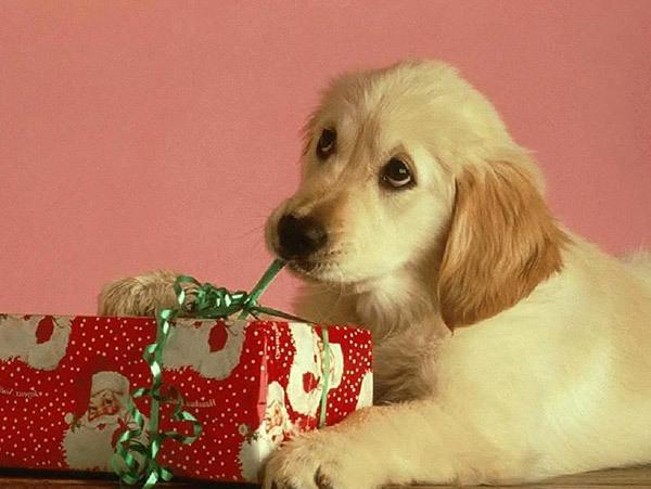 подарки новый год 2018 собаки