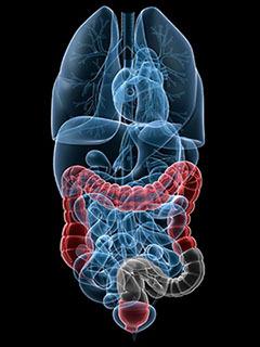 анатомия внутренних органов  рисунок