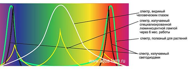хорошей эластичности, необходимые для растений спектр ламп производителей современного термобелья
