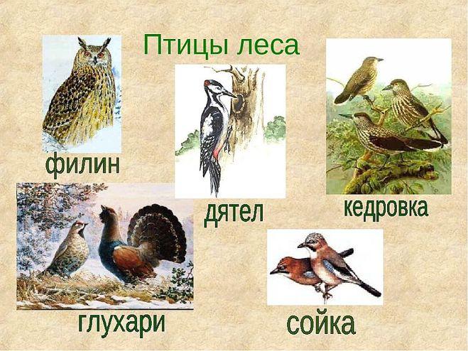 доклад лес и его обитатели