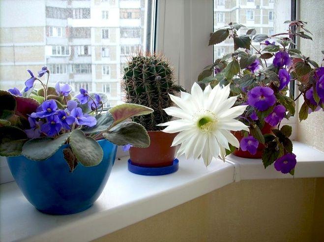 Красивые домашние цветы разные