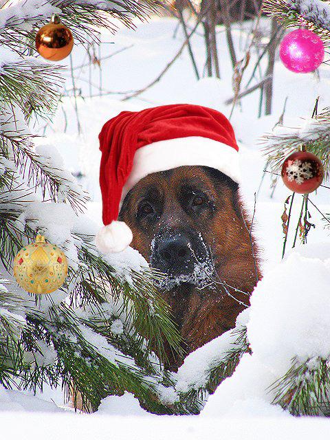 прикольные, забавные, смешные открытки в Новый год Собаки