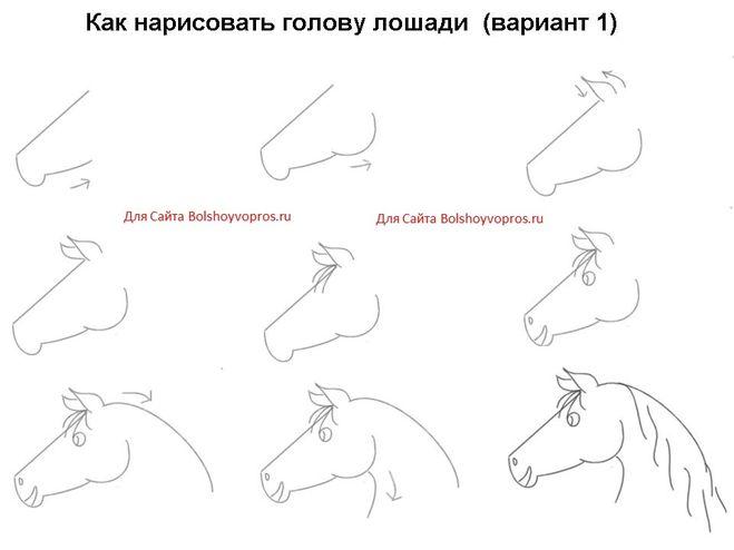 Как нарисовать лицо лошади поэтапно