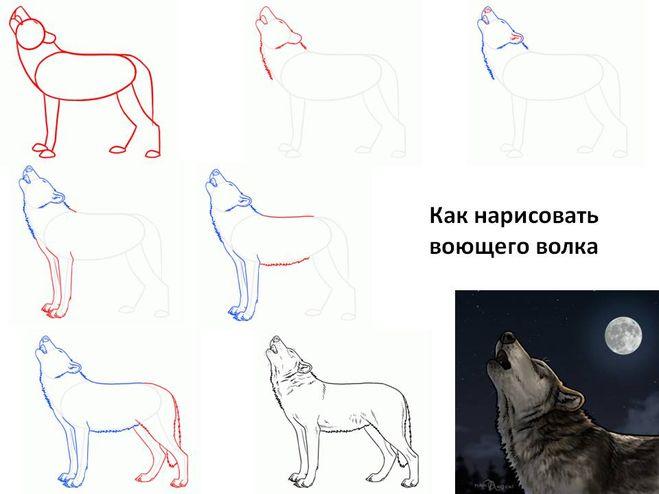 Картинки волков поэтапно карандаш