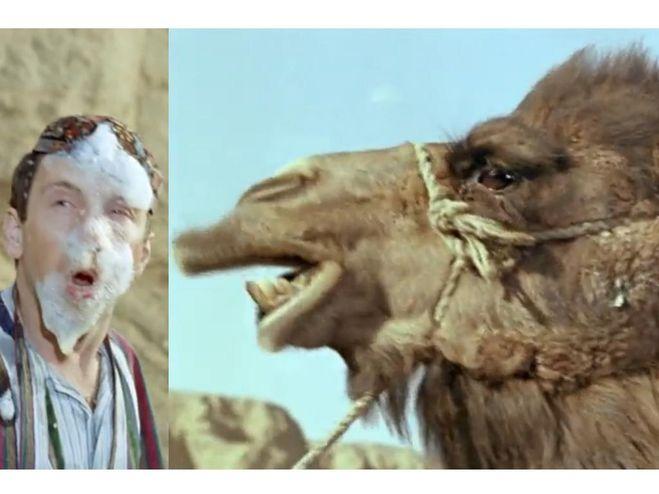 Положи верблюда