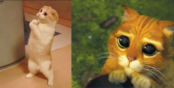 Фото кота с мультика шрека