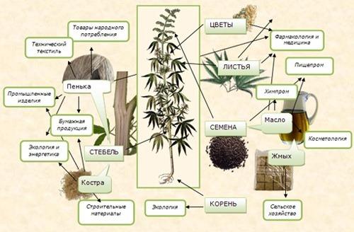 Как правильно выращивать марихуану в домашних условиях