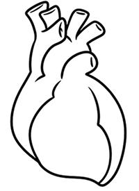 Сердце реалистичный рисунок
