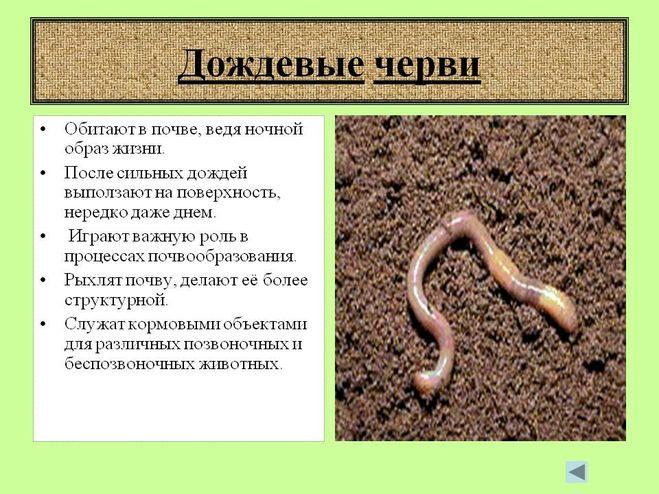 Беременный червяк