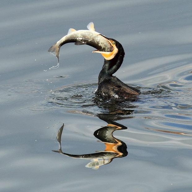 Почему птицы не плавают