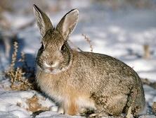 Рассказ о красоте зайца