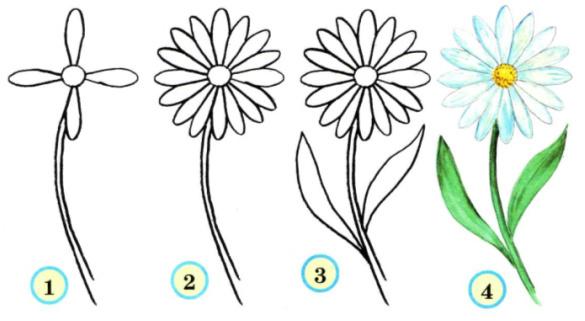 цветы с помощью карандашей