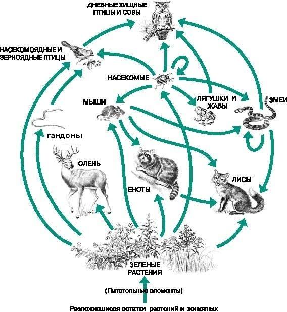 Схема питания лугового сообщества 4 класс фото 398