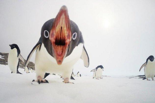 фотография, пингвины