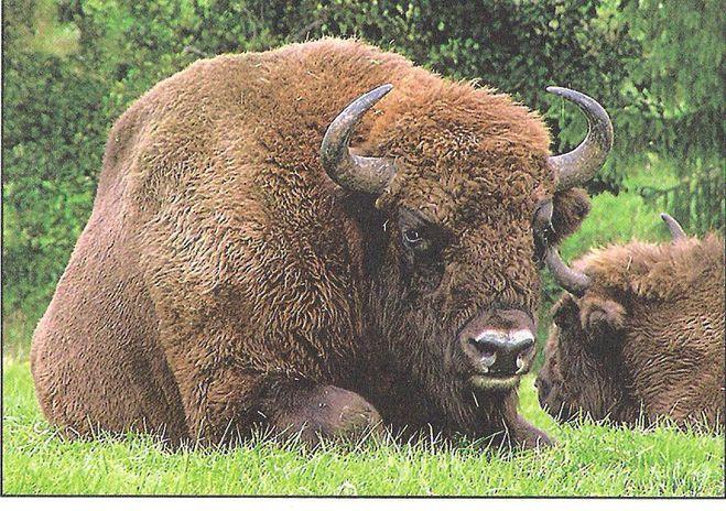 Животное которое занесено в красную книгу картинки 2