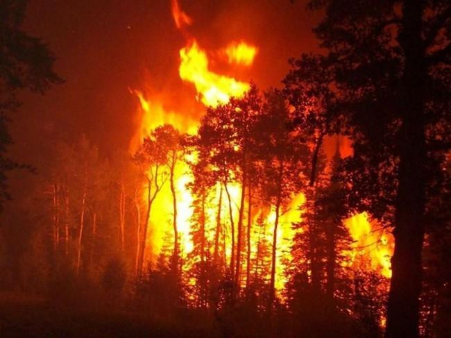 Картинки на тему беречь природу от пожара