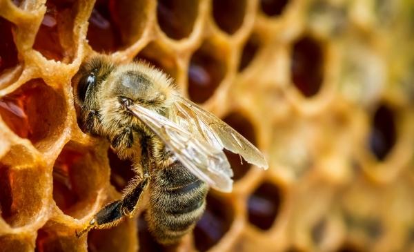натуральность мёда в домашних условиях