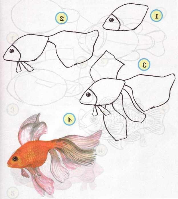 Как рисовать рыбку поэтапно презентация