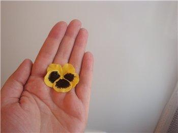 анютины глазки из мастики