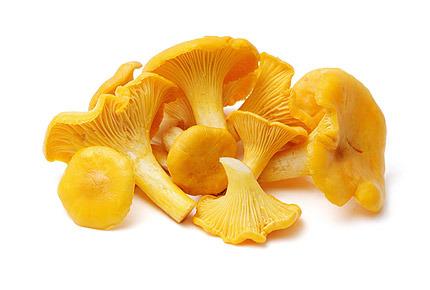 """лисички грибы, почему грибы """"лисички"""" лисички?"""