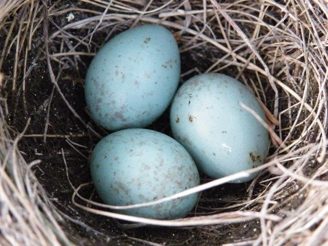 Птицы яйца заработок лучший заработок на серфинге