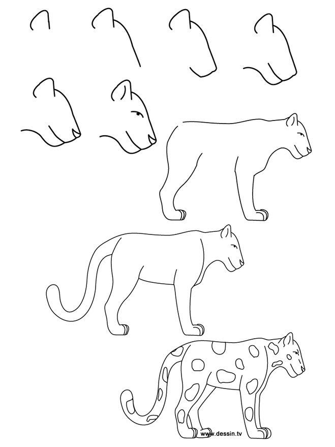Семейство кошачьих, но разные