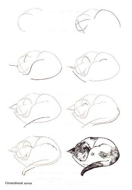 Как рисовать спящего кота