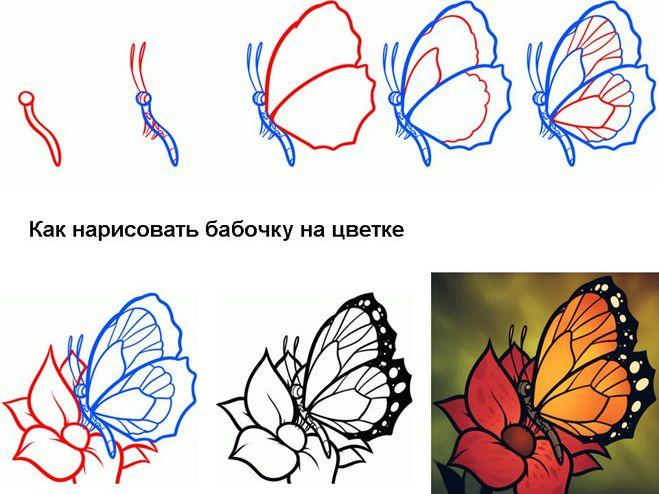 Научится рисовать бабочку карандашом
