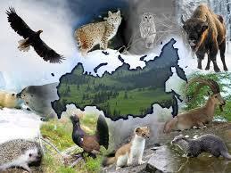 животные России в Красной Книге