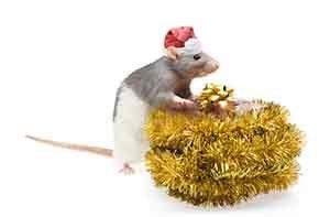 стихи про мышей и крыс для поздравления на Новый год 2020