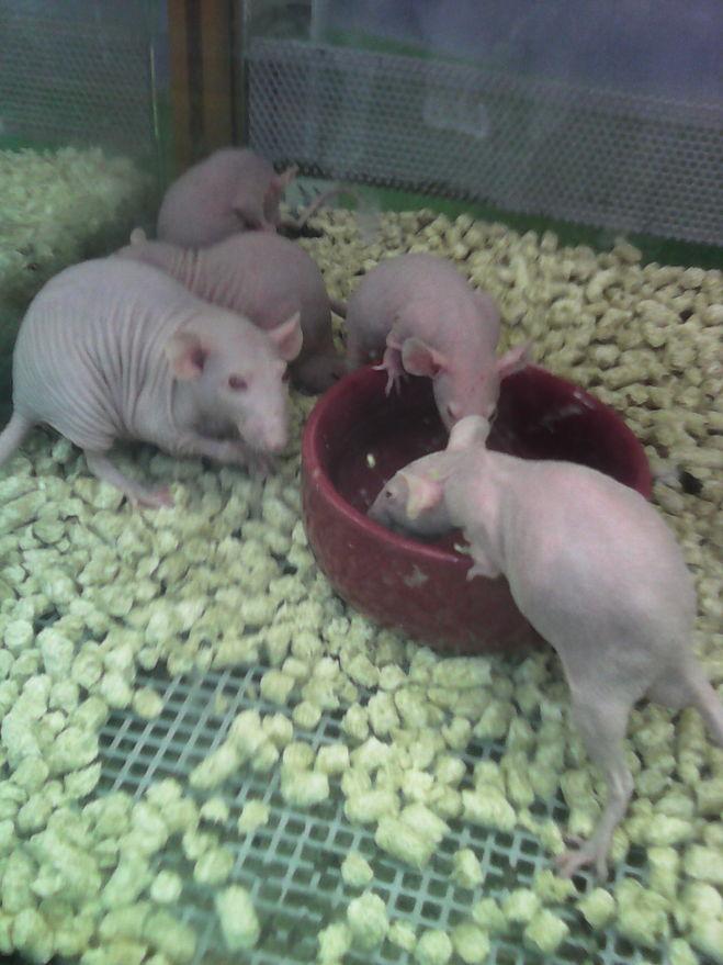 мыши в зоомагазине